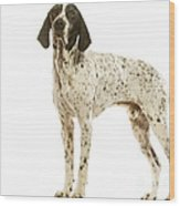 Auvergne Pointer Wood Print