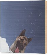Avalanche Rescue Wood Print