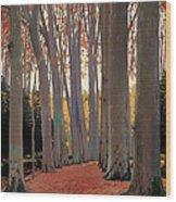 Avenue Of Plain Trees Wood Print