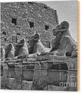 Avenue Of Sphinxes Wood Print