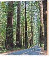 Avenue Of The Giants Wood Print