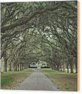 147706-avenue Of The Oaks  Wood Print