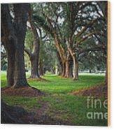 Avenue Of The Oaks On St Simons Island Ga Wood Print