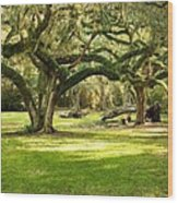 Avery Island Oaks Wood Print