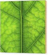 Avocado Leaf Wood Print