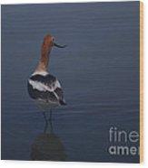 Avocet Wading Wood Print