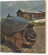 Avon Harbor Large Turtle 1 6/07 Wood Print