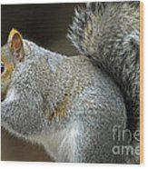 Aw Nuts Wood Print