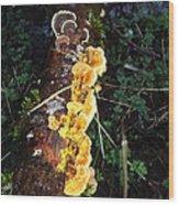 Awe Inspiring Fungi Two Wood Print