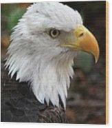 Awesome American Bald Eagle Wood Print