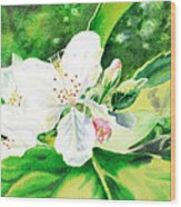 Awesome Apple Blossoms Wood Print