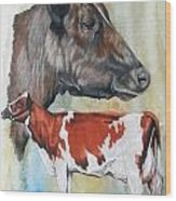 Ayrshire Cattle Wood Print