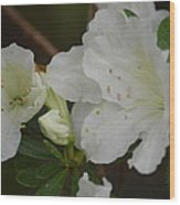 Azalea 14-4 Wood Print