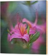 Azalea Color Mystere Wood Print