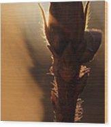 Azalea Flower Bud Sunrise - 1 Wood Print