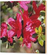 Azalea IIi Wood Print by Aya Murrells