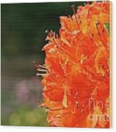 Azalea Profile Wood Print