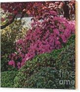Azaleas And Red Maple Tree Wood Print