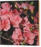 Azaleas In Oil Wood Print