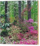 Azaleas Red Maple And Magnolia Trees Wood Print