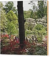 Azaleas Us National Arboretum Wood Print