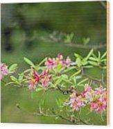 Azalea  Run  By Zina Zinchik Wood Print