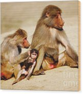 Baboon Family In The Desert Wood Print