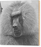 Baboon In Black And White Wood Print