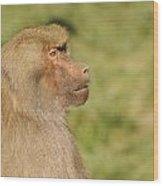 Baboon Wood Print