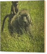 Baboon Wood Print by Jennifer Burley