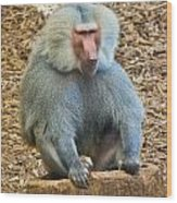 Baboon On A Stump Wood Print