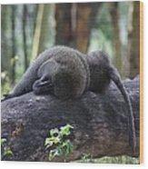 Baboon Sleeping Wood Print