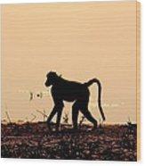Baboon Sunset Wood Print
