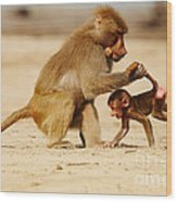 Baboon With Baby Wood Print
