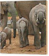 Baby African Elephants II Wood Print