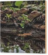 Baby Alligators Reflection Wood Print