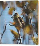 Baby American Goldfinch Learning To Fly Wood Print