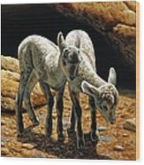 Baby Bighorns Wood Print by Crista Forest
