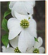 Baby Bloomers Wood Print