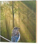 Baby Blue In Morning Fog Sunlight Wood Print