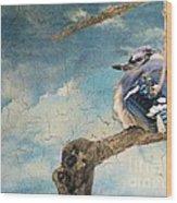 Baby Blue Jay In Winter Wood Print