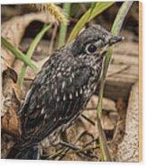 Baby Bluebird Wood Print