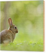 Baby Bunny In The Forest Wood Print