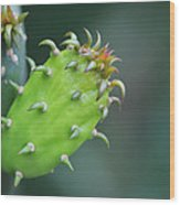 Baby Cactus - Macro Photography By Sharon Cummings Wood Print