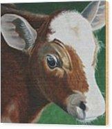 Baby Calf Wood Print