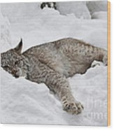 Baby Canadian Lynx Laying In The Snow Wood Print