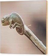 Baby Chameleon Wood Print