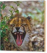 Baby Cheetah  Wood Print