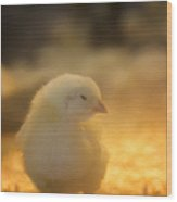 Baby Chick Wood Print