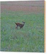 Baby Deer At Sunrise Wood Print